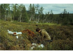 Вероятно были обнаружены осколки Тунгусского метеорита
