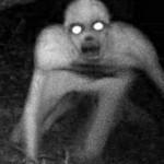 Странные существа – уникальные кадры, зафиксированные на видео